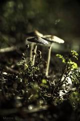 Petite balade (marineGib) Tags: champignons foret lumiere bokeh bois nature macro proxi