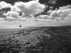 The amazon (alestaleiro) Tags: jericoacoara monochrome solitudine mnocromo bw bianconero gopro water deserto dessert desierto dunas mar mer ceará nordeste brasil alejandrodavidoliveraphotography alestaleiro