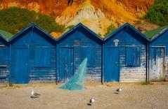 no fish to day (peter manintveld) Tags: fujixt2 fujixf1855mmf284rlmois xt2 aurorahdrpro fujifilm portugal algarve kleuren colours blue blauw meeuw seagull