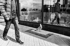 A seagull's life # 1 (devos.ch312) Tags: streetshot hipshot heupshot blindshot candidshot streetphotography monochrome sony ilce7rm2 a7rii a7rm2 fe2470mmf4zaoss seagull window windowreflections windowshopping windowdisplay blackandwhite christinedevos
