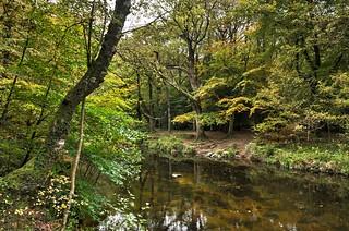 The Teign Valley, Dartmoor