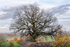 Bannams wood 20th November 2017 (boddle (Steve Hart)) Tags: mortonbagot england unitedkingdom gb steve hart boddle steven bruce wyke road wyken coventry united kingdon great britain canon 5d mk4 6d 100400mm is usm ii 2470mm standard 815mm fisheyes lens 1635mm l wideangle wide angle wild wilds wildlife life nature natural bird birds flowers flower fungii fungus insect insects spiders butterfly moth butterflies moths creepy crawley winter spring summer autumn seasons sunset weather sun sky cloud clouds panoramic 360