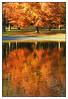 Reflet d'automne -  Autumn reflection (diaph76) Tags: france saisons seasons automne autumn normandie seinemaritime lehavre extérieur arbres trees eau water bassin reflets reflection forêt forest couleurs colors