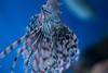 New England Aquarium (Jacob Waites) Tags: green new england aquarium boston aquatic life creatures sea ocean study fish lionfish lion