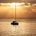 Sailing in golden sea - Tel-Aviv beach