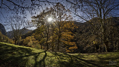 Otoño tardío/ Late autumn (Jose Antonio. 62) Tags: españa spain asturias picosdeeuropa arboles trees otoño autumn naturaleza nature backlight contraluz