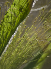 Abstraction végétale * (Titole) Tags: seeds abstract green titole nicolefaton light shadows