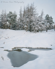 Frozen (.Brian Kerr Photography.) Tags: cumbria a7rii availablelight winter snow weather alston nenthead tree trees cold coldmorning predawn sony formatthitech nature naturallandscape natural outdoor outdoorphotography opoty briankerrphotography briankerrphoto landscape