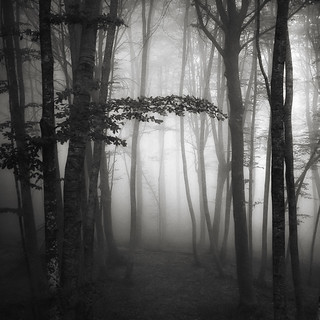 Light in the forest XV