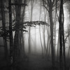 Light in the forest XV (ilias varelas) Tags: fog forest field light landscape land mono monochrome mood mist mountain blackandwhite bw atmosphere square nature greece trees