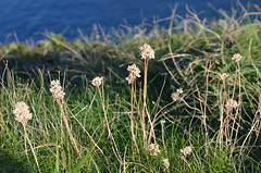 Ulia, ibilbidea