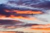 passing with flying colours (Paul Wrights Reserved) Tags: flying passing colours clouds sky skyscape bird birdinflight crow