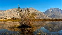 Reflections (sudarshini) Tags: ladakh lake landscape leh himalayas jammukashmir india incredibleindia travel nature