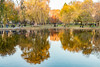 Boston Common Gardens at Dusk (Jill Clardy) Tags: boston travel trip vacation massachusetts common garden pond autumn autumnal fall leaf leaves orange yellow outdoors landscape 201711254b4a6774hdredit public lagoon water weeping willow tree reflection