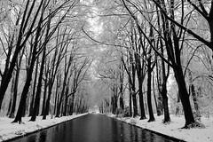 Sneeuw! (Esther Seijmonsbergen) Tags: winter marlot denhaag sneeuwlandschap december mono zwartwit thehague thenetherlands holland winterinholland estherseijmonsbergen marlotbos vanishingpoint wegkijkpunt coderood codeoranje sneeuwoverlastinnederland