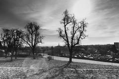 Winter sun over the cathedral (Linz, Austria) (Michael Wögerbauer) Tags: austria linz oberösterreich pöstlingberg upperaustria österreich contrejour gegenlicht backlight schwarzweiss schwarzweis noiretblanc blackandwhite blackwhite bw winter sun wintersonne