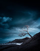 out of darkness comes creation (Andrew J Lee) Tags: infrared wales breconbeacons tree alone lonely light creation