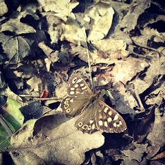 (Daniel James Greenwood) Tags: nokialumia phonephoto mobilephonephotos danielgreenwood danielgreenwoodphotography instagramphotography instagram