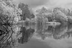 Something a little different... (iantaylor19) Tags: warwickshire wildlife trust brandon marsh