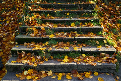 Steps (scottprice16) Tags: england lancashire clitheroe autumn leaves fallen steps edisford november crisp frost morning light colour orange yellow red fall sony sonya6000 zeiss1670mmf4