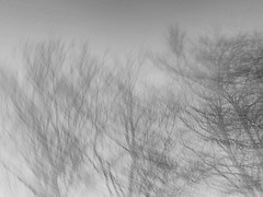 (ijclark) Tags: woodland nature abstract intentionalcameramovement tree blackandwhite iphone iphoneography