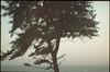 556 (konophotography) Tags: konophotography konophoto filmisnotdead film filmphotography 35mm analog analogue nature india 2017 buyfilmnotmegapixels ishootfilm sea