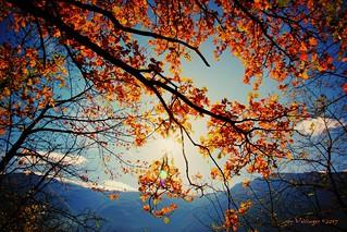autumn sun / Herbstsonne ( i ♥ autmn )