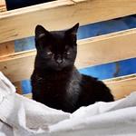 Medio dormido #barcelonagatigos #gatos #gatoscallejeros #cats #photocats #instacats #neko #meow #gatze #gatto #koshka #catsofworld #catsofinstagram #streetcats #chat #blackcat #gatonegro thumbnail