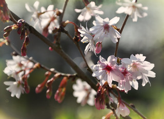 Songe de printemps...