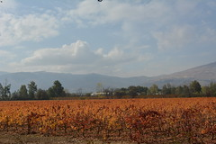 (Marwanhaddad) Tags: landscape nature autumn