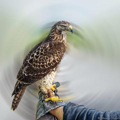 Tête-à-tête (musette thierry) Tags: musette thierry bird oiseau realisation animaux pose composition cadrage