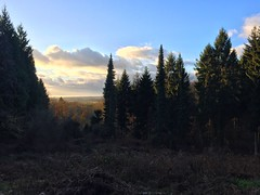 View From The Forest (Marc Sayce) Tags: view fall autumn november 2017 alice holt forest hampshire farnham surrey south downs national park