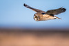 Short-Eared Owl (mLichy911) Tags: shorteared owl owls wild wildlife nature bird raptor flight pnw wa seattle winter canon 7dmarkii 500f4 bokeh morning goldenhour action
