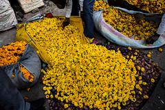 Jaipur Market (Jessica Legrais) Tags: flower color yellow market