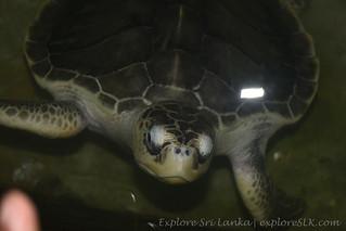 Sea Turtle Hatchery Sri Lanka