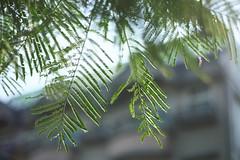 馬祖新村_17 (Taiwan's Riccardo) Tags: 2017 taiwan digital color dslr nikondf nikonlens seriese fixed 50mmf18 桃園縣 中壢 龍岡 馬祖新村