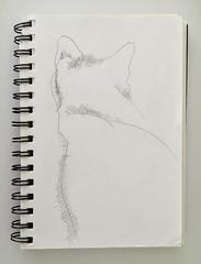 01_gato ([silvicius]) Tags: taller soniaesplugas illustration ilustración boceto sketch colores colors silvicius silviaparravicini silvis