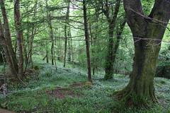 IMG_3179 (avsfan1321) Tags: connemaranationalpark connemara nationalpark ireland countygalway green lush landscape plants