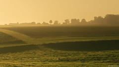""" tijdloze rust"" (B.Graulus) Tags: photography landscape morning fields sunrise trees huldenberg vlaamsbrabant vlaanderen flanders belgium belgië belgique silhouette canon nature"