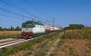 FS E652 133 (maurizio messa) Tags: pavese alpc lombardia tigre e652 mir cargo mau bahn ferrovia freighttrain fret guterzuge treni trains railway railroad nikond7100