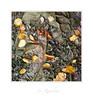 """Wind Blown"" - Helford River, Cornwall (Joe Rainbow) Tags: landscape square intimate 6x6 film mamiyarz67proii velvia50 leaves autumn mud creek cornwall helford nature"