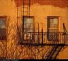 20161227_04 Warm light on brick building | Williamsburg, Brooklyn, New York City (ratexla) Tags: ratexla'snewyorktrip2016 williamsburg brooklyn newyorkcity 27dec2016 2016 canonpowershotsx50hs newyork usa theus unitedstates theunitedstates america northamerica nordamerika earth tellus photophotospicturepicturesimageimagesfotofotonbildbilder wanderlust winter travel travelling traveling journey vacation holiday semester resaresor urban city town storstad storstäder storstadssemester ontheroad building buildings house houses brick bricks window windows fönster fireescape brandtrappa brandtrappor fireescapes old gammal gammalt catchycolorsorange favorite