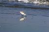 IMG_3289 (SweetMeow) Tags: harborisland sthelenaisland ocean beach cameraclub sanderling