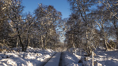 Snowy road trip today (prajpix) Tags: road drive snow weather sky trees woods forest invernessshire highlands scotland