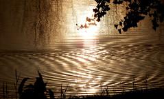 Zonsopkomst ( Sunrise) 07112017 (megegj)) Tags: gert sunrise zonsopkomst licht light