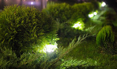 2014. Lviv. Ukraine (bobobahmat) Tags: 2014 lviv lvov life ukraine night lawn green bush plant light lamp illumination