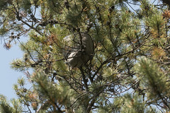 """Hornet nest • <a style=""""font-size:0.8em;"""" href=""""http://www.flickr.com/photos/63501323@N07/38310066391/"""" target=""""_blank"""">View on Flickr</a>"""