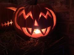IMG_8040 (winchesterhollow) Tags: halloween halloween2017 jackolanterns pumpkins