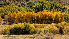 Autumn Bounty (chasingthelight10) Tags: events photography travel landscapes canyons foliage forests lakes mountains nature seasons places california junelakeloop junelake things autumn autumnleaves otherkeywords alpinelake aspens cottonwoods creeks