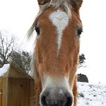 Horse in the snow. thumbnail